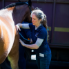 Horse massage at 2017 conference&lt;br/&gt;&lt;a href=&quot;gallery/30-years-of-mti/41/add/#comments&quot;>Add comment</a>